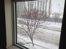 窓の配置が上手くいきました。