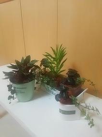 植物と癒しの時間♪