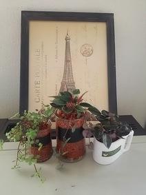 インゾーネ家展 ~キンフォークの豊かな暮らし~